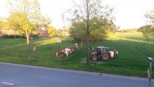 Unsere Nachbarn Foto: © Imke S.